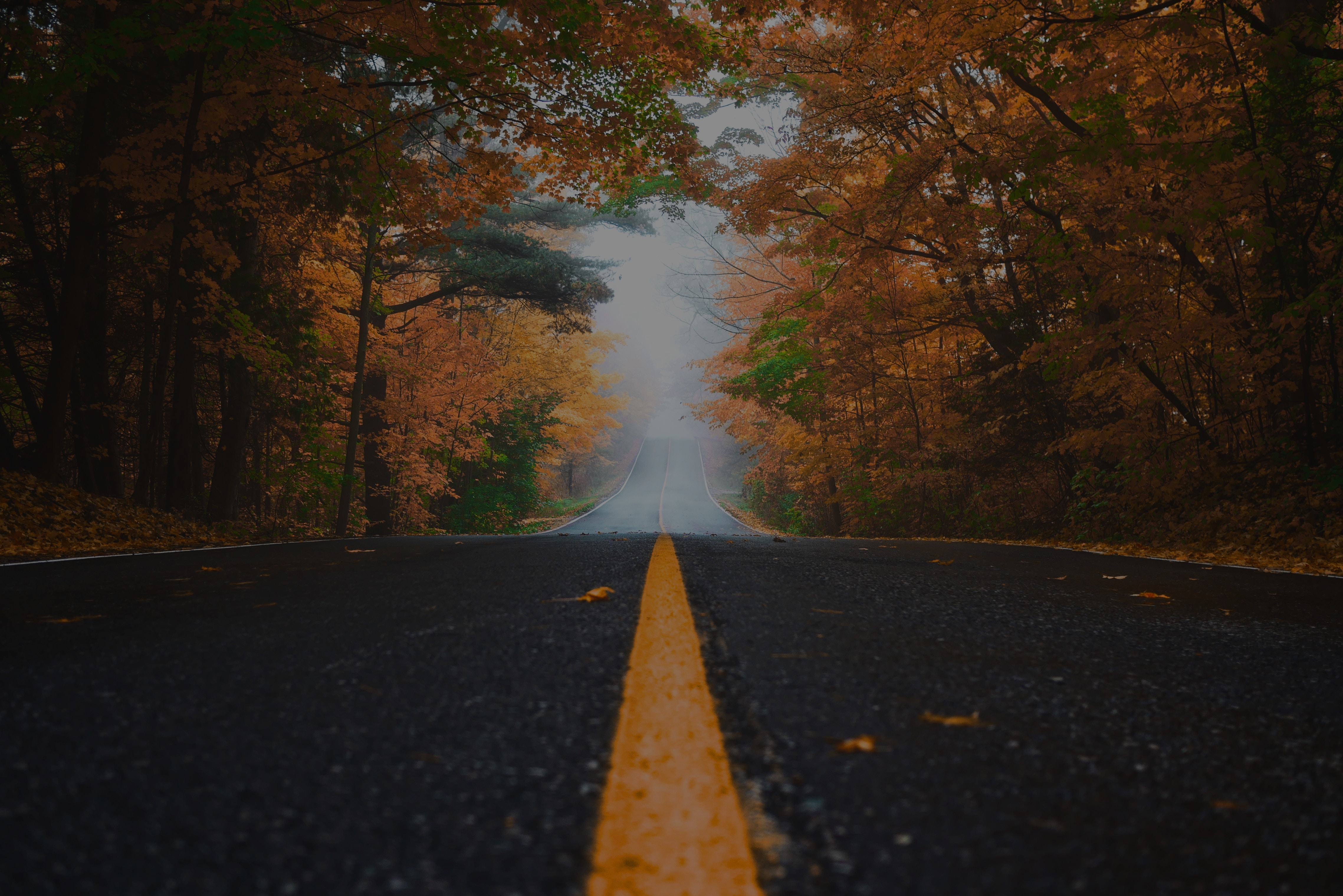 autumn road with fog