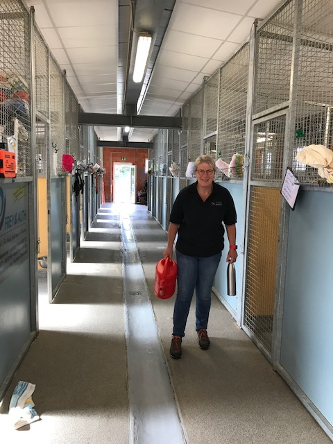 helping hands in animal shelter